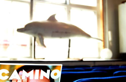 delfinskultptur i Caminos fönster